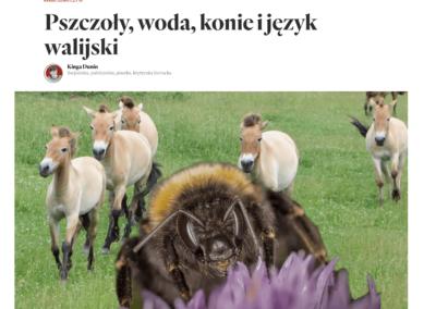 """Krytyka Polityczna o powieści """"Niebieska Księga z Nebo"""""""